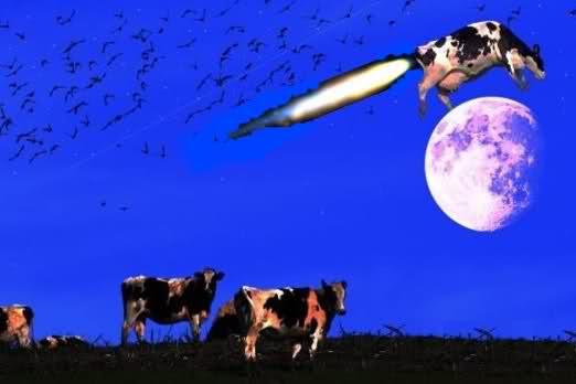 Cowfart